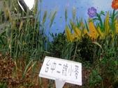 13-03-18大雅小麥田、趙家窯、后里星月大地(夜):DSCF0003.jpg