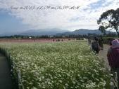 15-11-09新社花海:DSC_6595.jpg