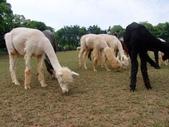 13-04-15天馬牧場:DSCF0029.jpg