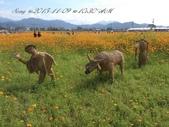 15-11-09新社花海:DSC_6696.jpg