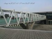 15-11-07銅鑼杭菊:DSC_6577.jpg
