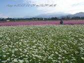 15-11-09新社花海:DSC_6596.jpg