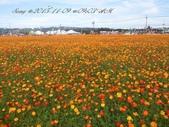15-11-09新社花海:DSC_6600.jpg