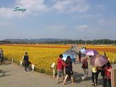 14-11-10新社花海:DSC_3797.jpg