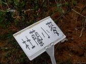 13-03-18大雅小麥田、趙家窯、后里星月大地(夜):DSCF0005.jpg