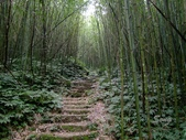 11-10-31馬拉邦山、后里月眉糖廠、后里千年大樟樹:DSCF7315.jpg