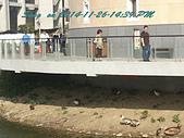 14-11-26苗栗後龍 客家圓樓、合歡石滬、外埔漁港:DSC_4081.jpg