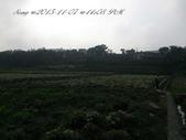 15-11-07銅鑼杭菊:DSC_6548.jpg