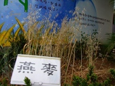13-03-18大雅小麥田、趙家窯、后里星月大地(夜):DSCF0006.jpg