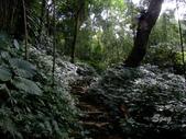 11-10-31馬拉邦山、后里月眉糖廠、后里千年大樟樹:DSCF7320.jpg