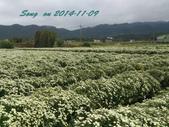 14-11-09&13銅鑼賞杭菊:DSC_3756.jpg