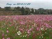 14-11-09&13銅鑼賞杭菊:DSC_3767.jpg