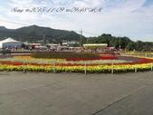 15-11-09新社花海:DSC_6653.jpg