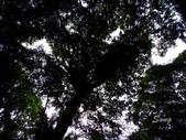 11-10-31馬拉邦山、后里月眉糖廠、后里千年大樟樹:DSCF7321.jpg