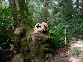 11-10-31馬拉邦山、后里月眉糖廠、后里千年大樟樹:DSCF7322.jpg