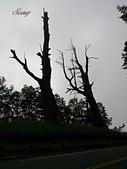 14-06-02~06五度環島:臺21線 新中橫公路 夫妻樹