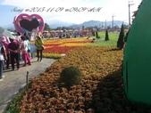 15-11-09新社花海:DSC_6606.jpg