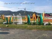 15-11-09新社花海:DSC_6617.jpg