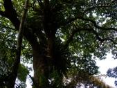 11-10-31馬拉邦山、后里月眉糖廠、后里千年大樟樹:DSCF7325.jpg