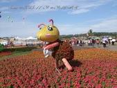 15-11-09新社花海:DSC_6621.jpg