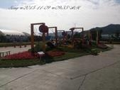 15-11-09新社花海:DSC_6665.jpg