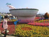 14-11-10新社花海:DSC_3812.jpg