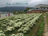 14-11-09&13銅鑼賞杭菊:DSC_3772.jpg