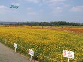 14-11-10新社花海:DSC_3830.jpg