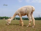 13-04-15天馬牧場:DSCF0013.jpg