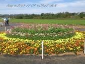 15-11-09新社花海:DSC_6651.jpg