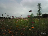 09-07-18台中后里花田拼布公園(環保公園):P18-07-09_09.10[1].jpg