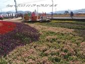 15-11-09新社花海:DSC_6640.jpg