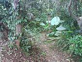 08-11-17白米甕砲台、仙洞巖、佛手洞:瞭望台旁的山徑