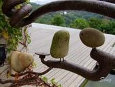 11-11-07苗栗 天空之城:DSCF7434.jpg