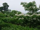 13-04-22苗栗 客家大院、四月雪小徑、火炎山:桐花樂活公園-客家大院