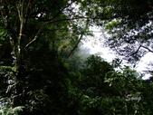 11-10-31馬拉邦山、后里月眉糖廠、后里千年大樟樹:DSCF7332.jpg