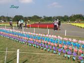 14-11-10新社花海:DSC_3840.jpg