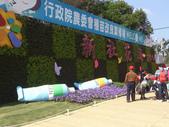 14-11-10新社花海:DSC_3850.jpg