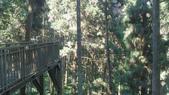 2014-10-20南投 天空之橋、藏傘閣、溪頭、妖怪村、埔里鎮立圖書館:溪頭