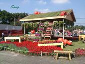 14-11-10新社花海:DSC_3851.jpg