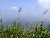 11-10-31馬拉邦山、后里月眉糖廠、后里千年大樟樹:DSCF7339.jpg