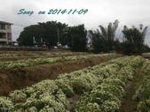 14-11-09&13銅鑼賞杭菊:DSC_3743.jpg