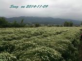 14-11-09&13銅鑼賞杭菊:DSC_3776.jpg