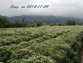 14-11-09&13銅鑼賞杭菊:DSC_3777.jpg