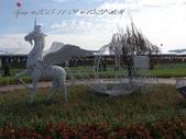 15-11-09新社花海:DSC_6689.jpg
