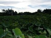 12-07-09大甲 建興里海邊、賞蓮part3、松柏港看海看夕陽:大甲苗圃