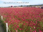 15-11-09新社花海:DSC_6594.jpg