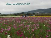 14-11-09&13銅鑼賞杭菊:DSC_3768.jpg