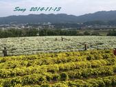 14-11-09&13銅鑼賞杭菊:DSC_3902.jpg