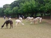 13-04-15天馬牧場:DSCF0021.jpg